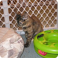 Adopt A Pet :: Dawnpetal - Geneseo, IL