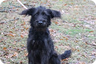 Terrier (Unknown Type, Medium) Mix Dog for adoption in Conway, Arkansas - Sid