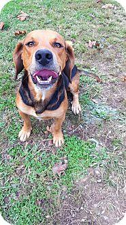 Beagle/Hound (Unknown Type) Mix Dog for adoption in Fairmont, West Virginia - Atlantis