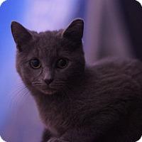 Adopt A Pet :: Ivan - Stafford, VA