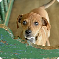 Adopt A Pet :: Martin - San Antonio, TX
