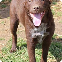 Adopt A Pet :: Syndee - Columbia, TN