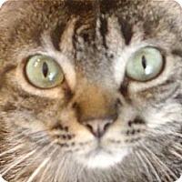 Adopt A Pet :: Santa Monika - Deerfield Beach, FL