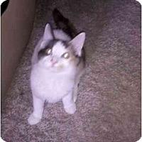 Adopt A Pet :: Cecil - Riverside, RI