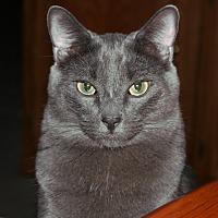 Adopt A Pet :: Cooper - Cerritos, CA