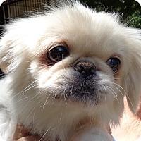 Adopt A Pet :: Mandie Sue - Crump, TN