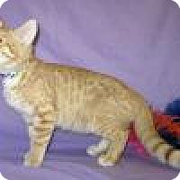 Adopt A Pet :: Garfield - Powell, OH