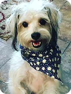 Terrier (Unknown Type, Small) Mix Dog for adoption in Mission Viejo, California - JACK