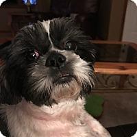 Adopt A Pet :: Ziggy Turner - Urbana, OH