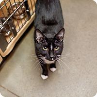 Adopt A Pet :: Caesar - Statesville, NC