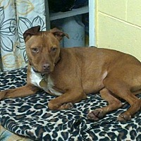 Adopt A Pet :: Star - Ellijay, GA