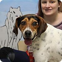 Adopt A Pet :: Hank - Elyria, OH