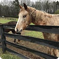 Adopt A Pet :: Choctaw - cumming, GA