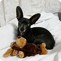 Adopt A Pet :: Tizzy - Alliance, NE