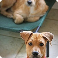 Adopt A Pet :: Astrea and Astro - Ft. Lauderdale, FL