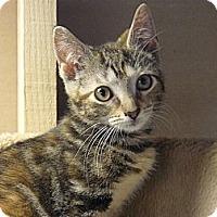 Adopt A Pet :: Chloe - Island Park, NY