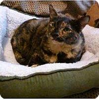 Adopt A Pet :: Miss Kitty - Little Rock, AR