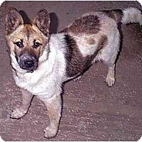 Adopt A Pet :: SHELBY - dewey, AZ
