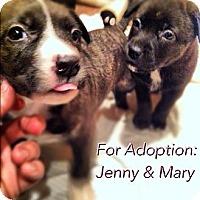 Adopt A Pet :: Mary - Shirley, NY