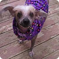 Adopt A Pet :: Reagan (PA) - Gilford, NH