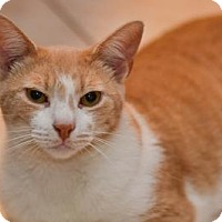 Adopt A Pet :: Lewis - Queens, NY