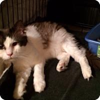 Adopt A Pet :: Joey - Edmonton, AB