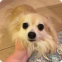 Adopt A Pet :: RAFIKE - Odessa, FL