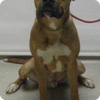 Adopt A Pet :: Tyler - Gary, IN