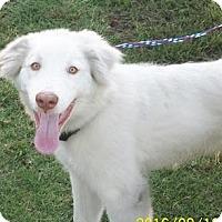 Adopt A Pet :: Luke  *Adopted - Tulsa, OK