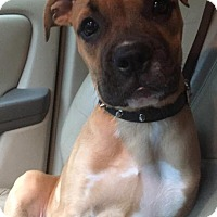 Adopt A Pet :: Nala - New Canaan, CT