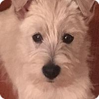 Adopt A Pet :: Gaston-Pending Adoption - Omaha, NE