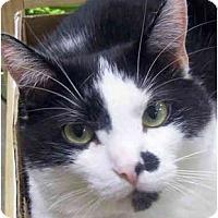 Adopt A Pet :: Bingham - Annapolis, MD