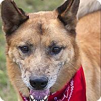 Adopt A Pet :: Drexel- Courtesy Post - West Hartford, CT