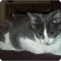 Adopt A Pet :: Baci - Davis, CA