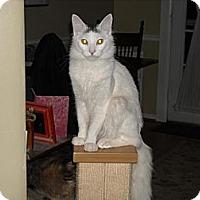Adopt A Pet :: Freddy - Arlington, VA