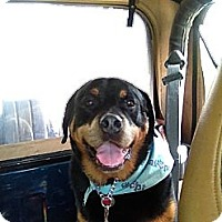 Adopt A Pet :: Rufus - Surrey, BC