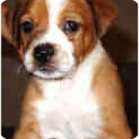 Adopt A Pet :: Cisco - Mesa, AZ