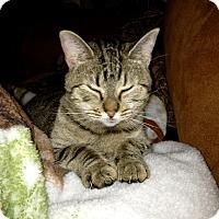 Adopt A Pet :: Fancy - Nolensville, TN