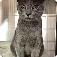 Adopt A Pet :: Milo - Arlington, VA