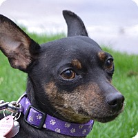 Adopt A Pet :: Mara~Adopted! - Troy, OH