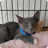 Adopt A Pet :: Jerry - Lighthouse Point, FL