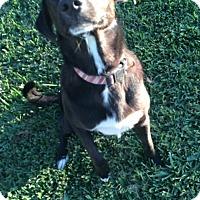Adopt A Pet :: Cain - Crowley, LA
