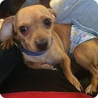 Adopt A Pet :: Toby - Homer, NY