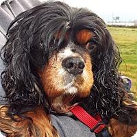 Adopt A Pet :: Nick - Grants Pass, OR