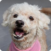 Adopt A Pet :: Maggie - La Costa, CA