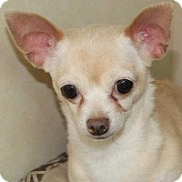 Adopt A Pet :: Maggie - Clear Lake, IA