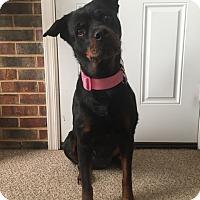 Adopt A Pet :: Francesca - Alexandria, VA
