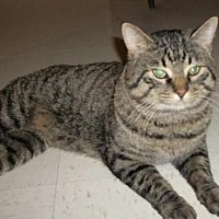Adopt A Pet :: Logan - Lacon, IL