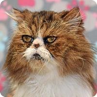 Adopt A Pet :: Fuzzy - Ventura, CA