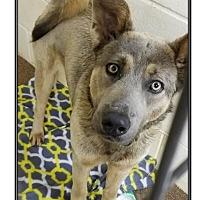 Adopt A Pet :: KAISER - LaGrange, KY
